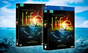 picture of BBC Life 4-Disc DVD or Blu-ray Set Sale