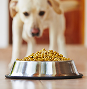 picture of Prime members save 40% on their first dog or cat food Subscribe & Save order
